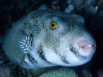 误食江水河豚鱼中毒之后该如何处理